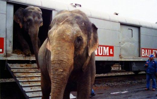 elephant-boxcar